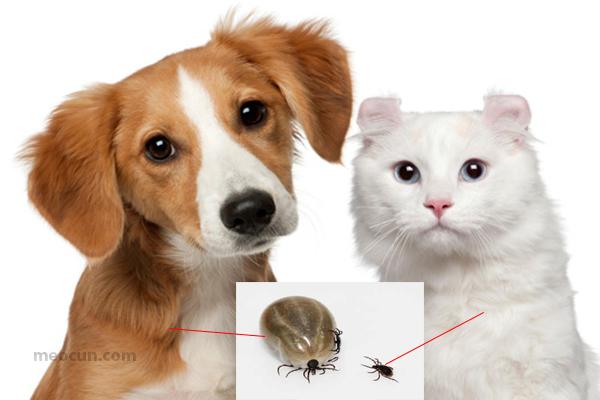 10 điều quái gở bạn cần biết về ve rận chó mèo - meocun.com