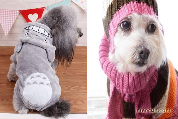 5 lưu ý chăm sóc chó mùa đông nhất định phải biết