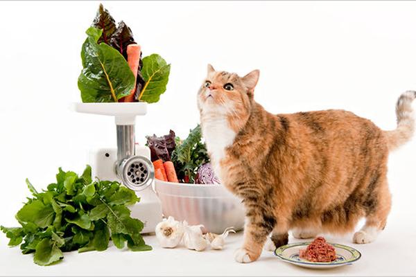 6 chất dinh dưỡng trong đồ ăn mèo bạn phải biết - chăm sóc mèo