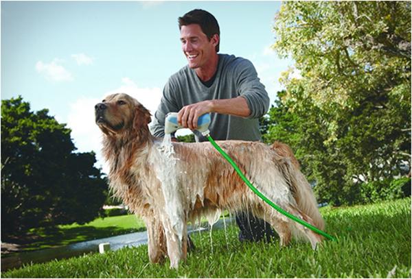 8 lời khuyên chăm sóc chó không thể bỏ qua