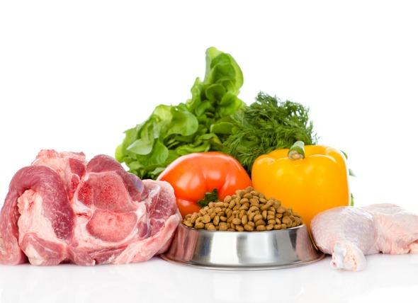 cân bằng dinh dưỡng trong thức ăn cho chó 6 tháng tuổi - thức ăn chó con