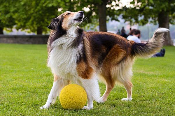 Bí quyết huấn luyện chó thành công meocun.com