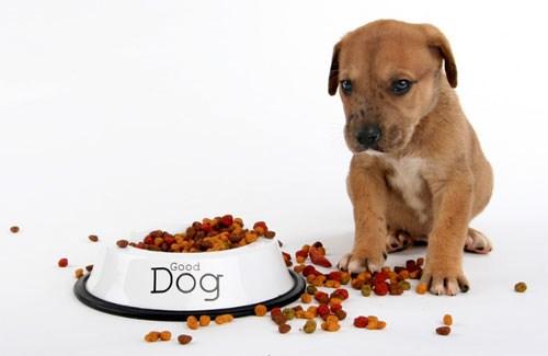bổ sung thức ăn cho chó mèo và những điều cần biết - thức ăn cho chó mèo
