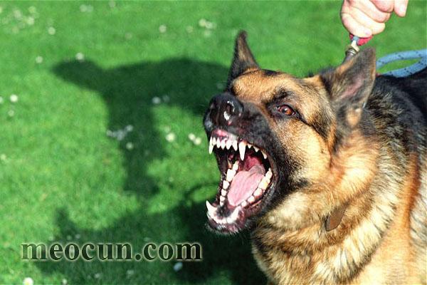 Dấu hiệu và cách phòng bệnh dại cho chó Mèo Cún Pet Shop