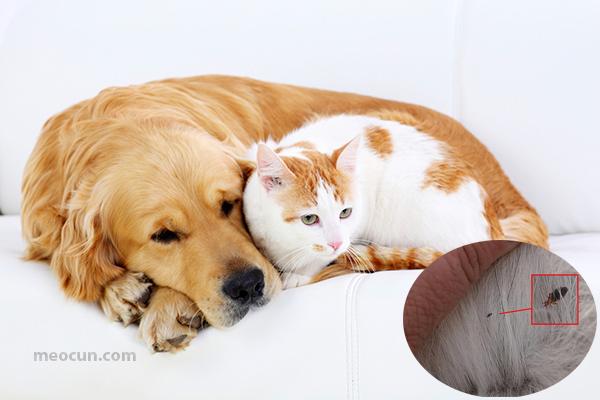 cách diệt ve rận bọ chét chó mèo - mèo cún