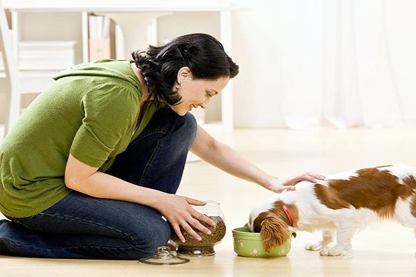Cho ăn đúng cách đảm bảo sức khỏe cún cưng - meocun.com