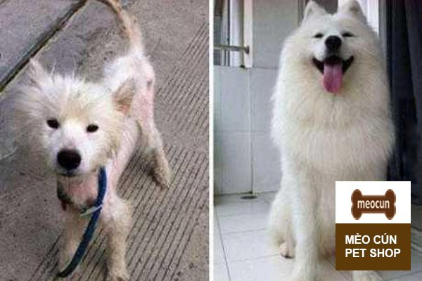Chó con bị gầy ăn gì để béo - Mèo Cún Pet Shop
