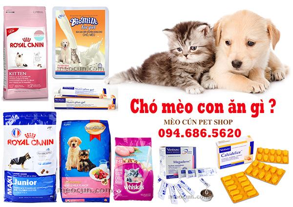 chó mèo con ăn gì ? Thức ăn cho chó mèo con giá rẻ.