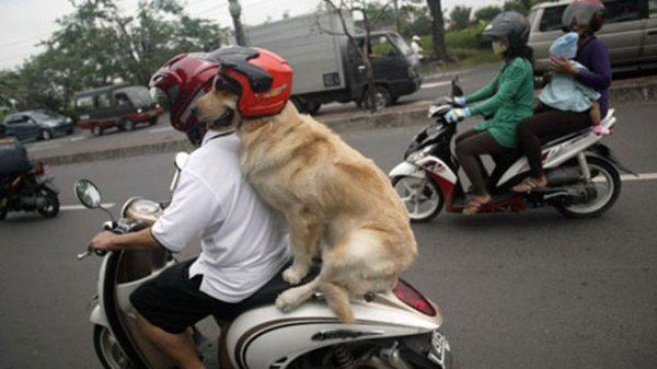 Chùm ảnh chứng minh người yêu không có nhưng cún nhất định phải có một em - Ảnh chó mèo hài hước