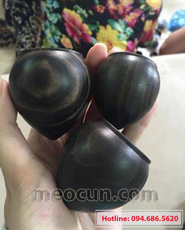Cóng chim gỗ mun - Meocun petshop
