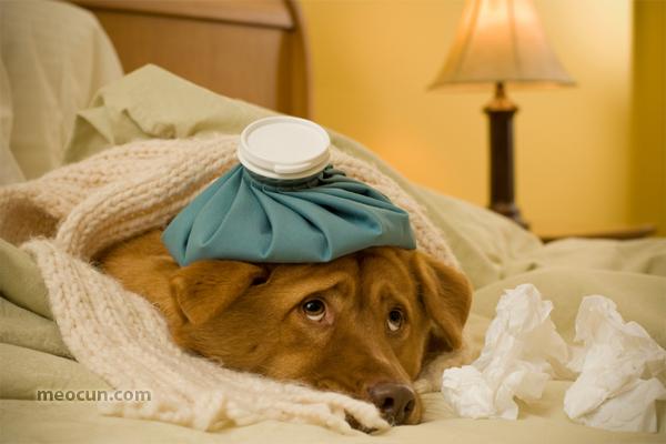 Cún cưng bị ốm cảm cúm - Mèo Cún Pet Shop