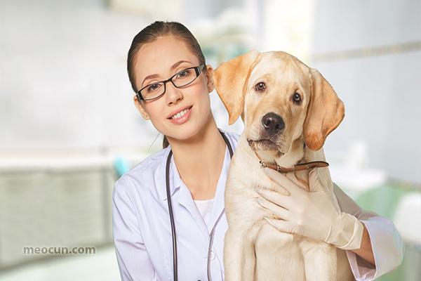Dấu hiệu nhận biết chó bị ốm - meocun.com