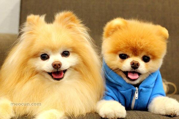Chăm sóc cún yêu khỏe mạnh, kiến thức thú cưng meocun.com