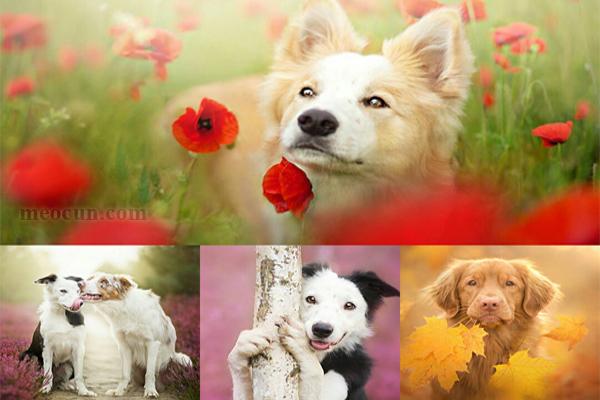 Ảnh chó đẹp - hình nền chó đẹp Mèo Cún Pet Shop