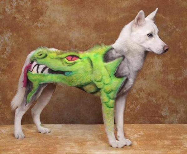 Chó mèo ngộ nghĩnh với nghệ thuật nhuộm lông tạo hình