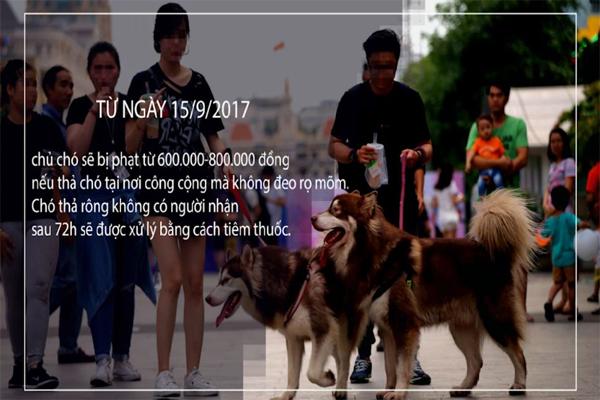 Người nuôi chó đã nắm rõ luật khi đem chó ra đường chưa ? - meocun.com