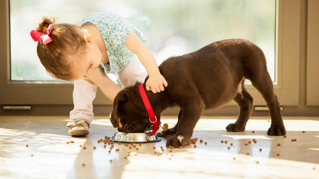 Giá thức ăn khô cho chó