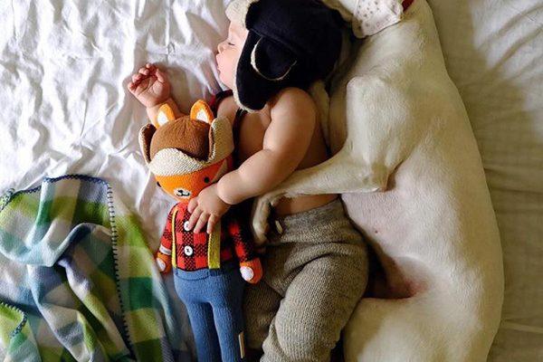 Tan Chảy trước tình bạn đẹp giữa chó và em bé - meocun.com