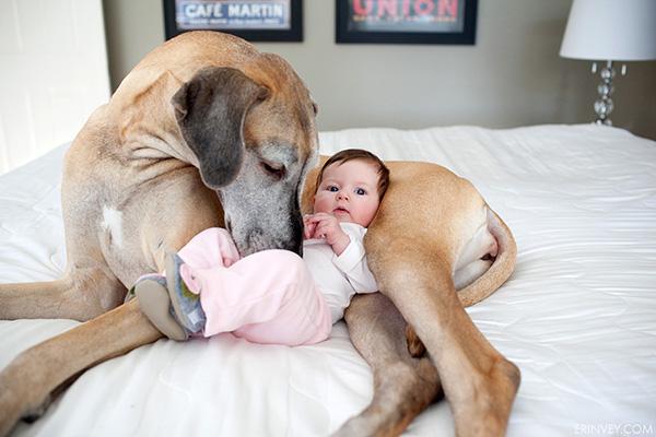 Tan Chảy trước tình bạn đẹp giữa chó và em bé - meocun.comTan Chảy trước tình bạn đẹp giữa chó và em bé - meocun.com