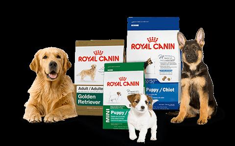 hạt Royal canin cho chó con