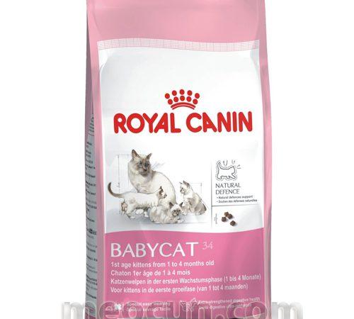 thức ăn cho mèo nuôi con Royal Canin BabyCat 34